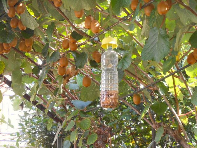 trappole-per-mosca-della-frutta-tap-trap