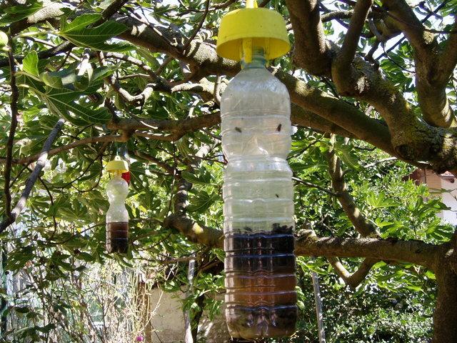 trappoe-per-mosca-della-frutta-appese-frutteto