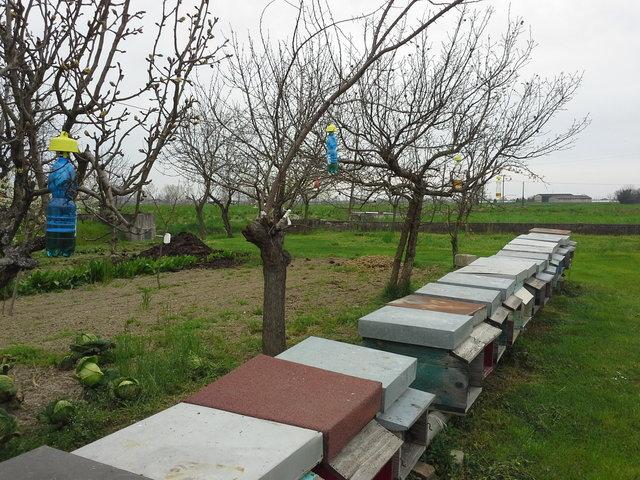 Tap Trap per difendere apiario
