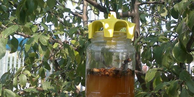 trappola per vespe vaso trap
