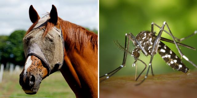 insetti-molesti-su-animali