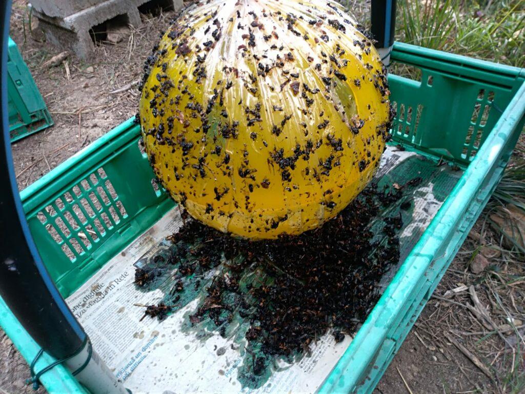piège-à-guêpes-rucher