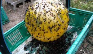 trappola-per-vespe-in-apiario