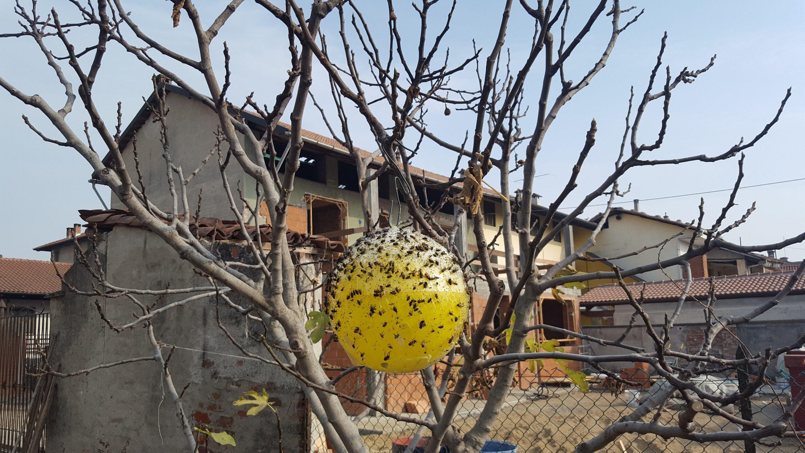 sfera-trap-insetti-mosche