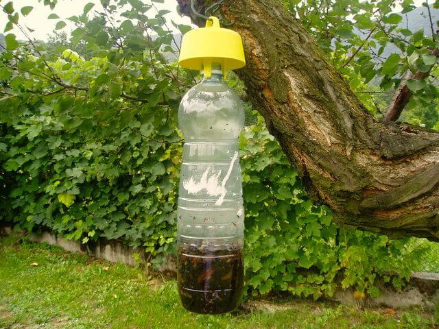 tap-trap-esca-ecologica-per-insetti-dannosi