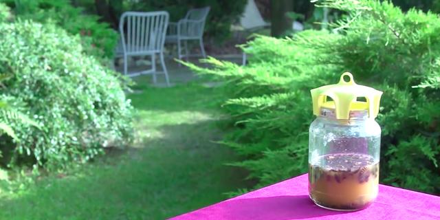 vaso-trap-dans-le-jardin